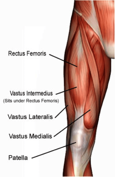 quadriceps-hockey